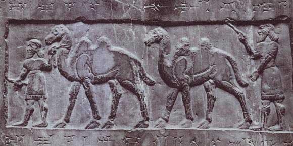 Camellos Shalmaneser