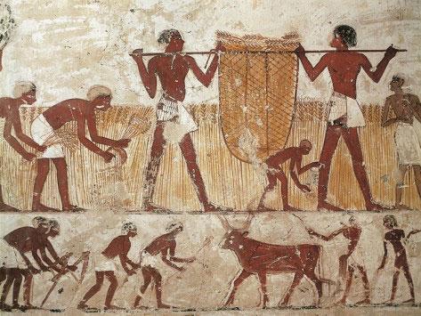 agricutura ptolemaica