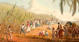 agropecuaria colonia america