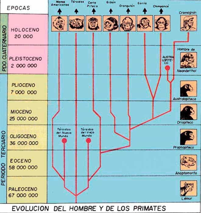 Primeros Hombres En La Tierra Historia Universal