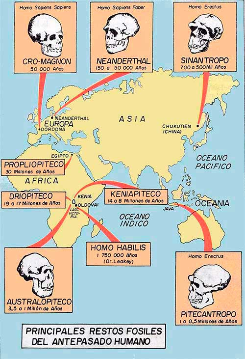 principales fosiles humanos