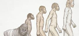 teoria evolucion hombre