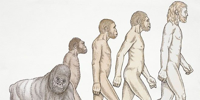 Teoria de Darwin Evolucion Del Hombre Teoria Evolucion Hombre